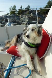 Weggegangen - Platz vergangen! Also hatte auch der Hund mal Urlaub ...