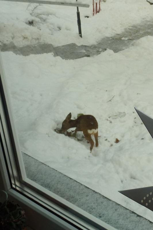Ein augenscheinlicher Freund von großen Blättern unter dem Schnee.