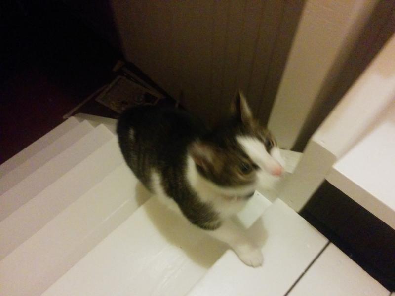 Nachbars Katze auf Besuch