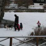 Nachbarn unterwegs: Halb-Husky wird als Schlittenhund für Kinderfahrten eingespannt!